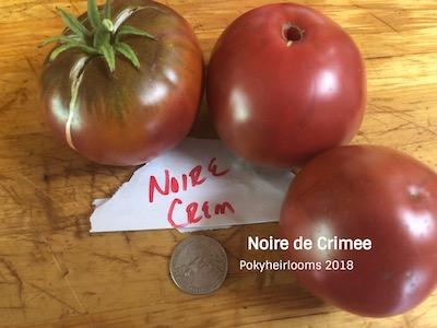 20 Pierce/'s Pride Purple Historical Tomato Garden Black Tomato Seeds